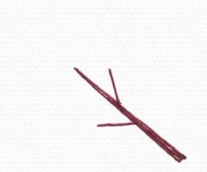 桜の花と枝の描き方
